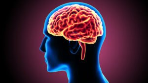 The Human Brain is a course taken when studying psychology